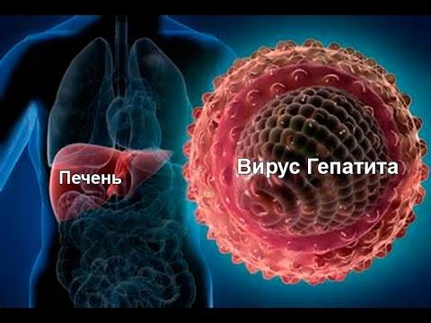 Принципы диагностики гепатита С и медикаментозная терапия