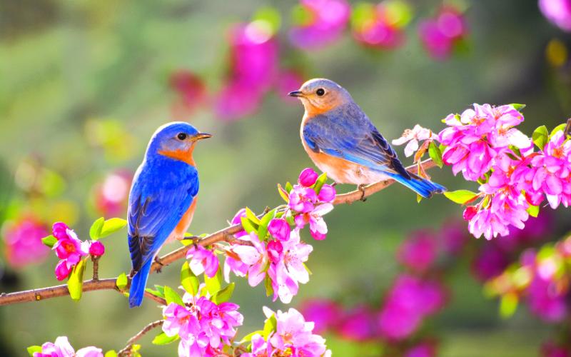 10 вещей, которые мы делаем, как только наступает весна